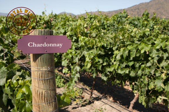 Nho-Chardonnay-4